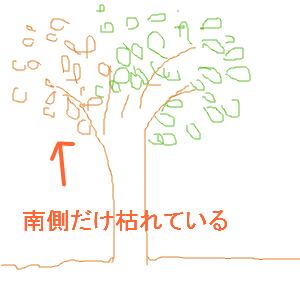 Cocolog_oekaki_2012_06_20_23_42