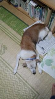 シロ新聞にのる