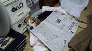 ハナと新聞