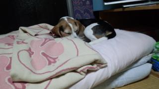 姫のお寝床